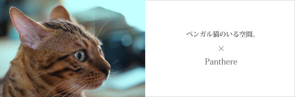 ベンガル猫のパンテールは、ペットショップのように繁殖目的の飼育はいたしません。専門ブリーダーとして、かわいい、綺麗な柄の性格の良いベンガル猫を愛情をもって育て、適正な価格でお売りいたします。