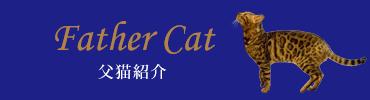ベンガル猫のパンテールでは、スポットやロゼットの綺麗な柄のベンガル猫の画像を更新しています。