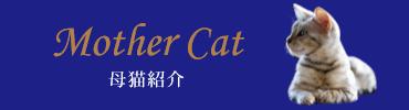ベンガル猫の画像を、定期的に更新しています。大きさやかわいさ、なつきやすさなどが伝わると思います。