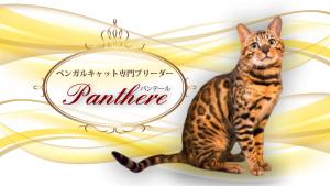 p_main_image